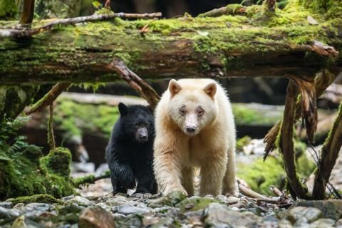 Ours to save: the species that can only be found in Canada