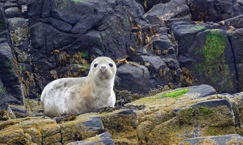 9 marvellous marine species to spot around UK shores this summer