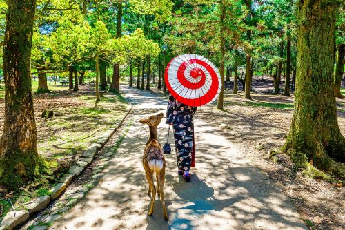 7 things to do in Nara, Japan