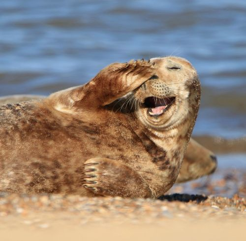 Happy seal is just what we all need to see at this time on a Monday afternoon