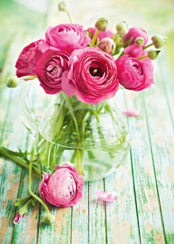 The best time to plant spring flowers anenomes and ranunculus