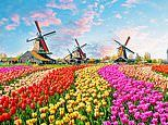 See the glory of Holland's tulips with Adam Frost - Exclusive for MoS readers