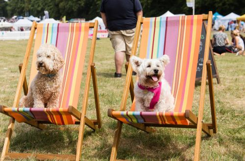 Screw Glastonbury, there's going to be a dog festival next year