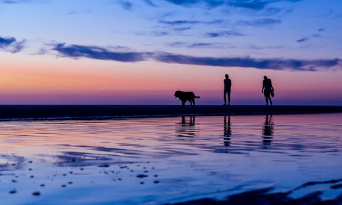 10 of the best dog-friendly beaches in Europe