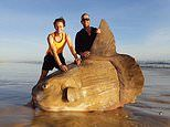 Giant sunfish is washed up on a deserted beach but anglers think it is fake because it is so huge