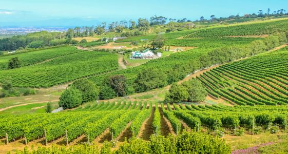 7 Must-Visit South African Wineries