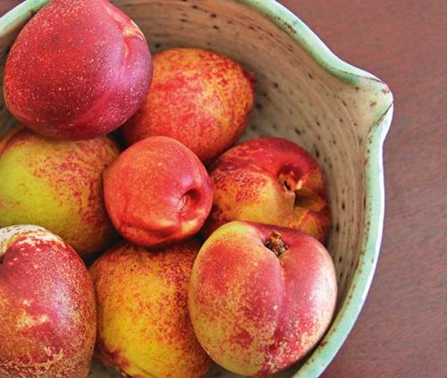 How to grow a pluot tree, the plum/apricot hybrid