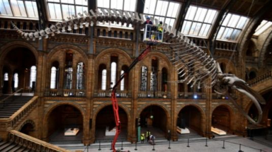 London's Natural History Museum prepares to reopen on August 5