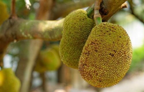 What Is Jackfruit? Here's Everything You Need to Know About the Trendy Meat Substitute