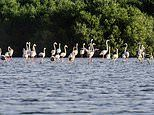 Why we'll soon be flocking to join the flamingoes of Ajman in the United Arab Emirates