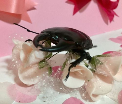 This beetle put more effort in than your boyfriend did this Valentine's Day