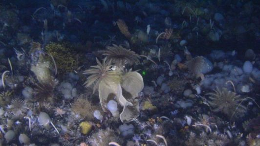 Secrets of Our Ocean Planet: Saving Sponges to Keep Marine Ecosystems Healthy