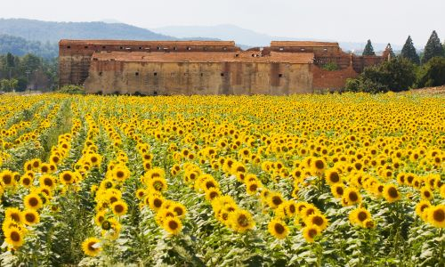 13 yellow places around the world that will brighten your day