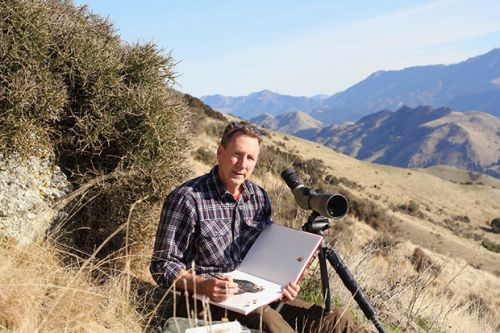Q&A: Wildlife artist Nicholas Dillon on patience, painting in the wild and which NZ bird is the weirdest