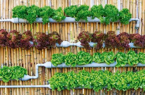 A beginner's guide to growing with hydroponics
