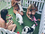 Hostel in Bali lets guests play with rescued PUPPIES by the pool - and stays cost £19 per night