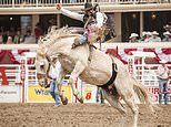 Howdy Canada! Saddle up for the ride of your life at the Calgary Stampede