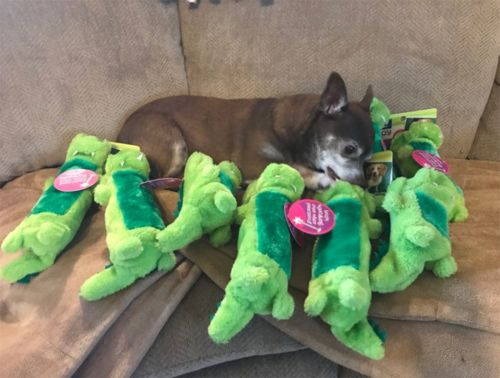 The internet did something nice for once and helped this old dog find her favourite toy