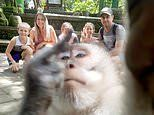 Monkey takes a selfie with a stunned family on holiday in Bali. and flips the middle finger!