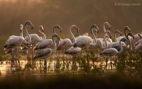 Top 25 Wild Bird Photographs of the Week: Flocks