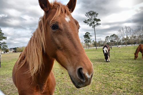 One Hotel Takes Pet-Friendly to the Next Level by Checking In a Horse