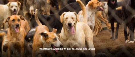 The largest no-kill shelter, which is home to 800 dogs, urgently needs your help