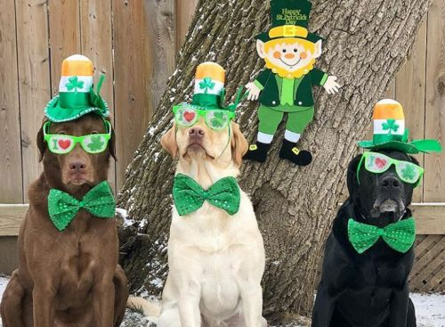 Nothing to see here, just some very good doggos celebrating St Patrick's Day