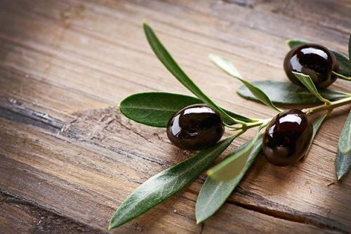 The secret to growing olives in cold weather