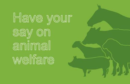 Have your say about surgical procedures on animals