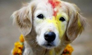 Puppy Puja: This festival in Nepal is dedicated to worshipping dogs
