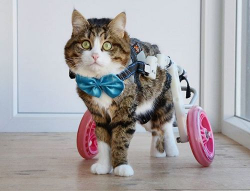 Handicat Rexie is the latest feline celeb to win our hearts and our feeds