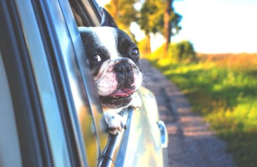 7 Safety Tips for Traveling with Dogs