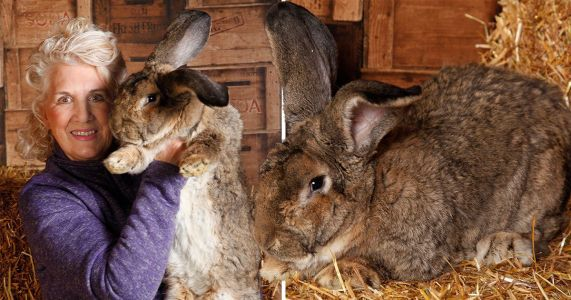 The world's biggest bunny is finally retiring from his lavish lifestyle