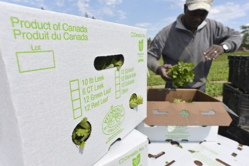 The Cost Of Taking Groceries For Granted: Canada's Food Labour Bill Is Coming Due