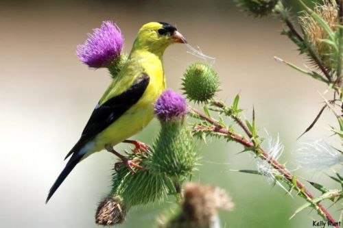 Top 25 Wild Birds Photographs of the Week: Birds in Flowers