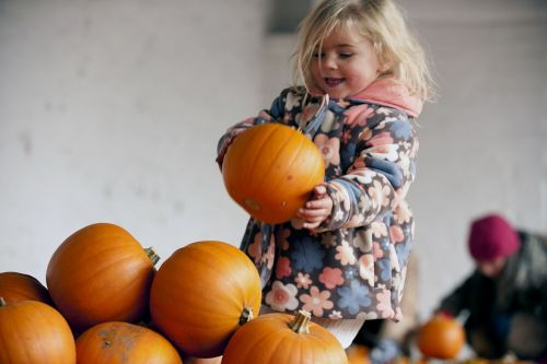 How long do Halloween pumpkins last and when should you carve them?