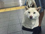 Meet the pampered pets who travel around in bags