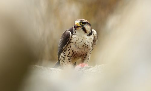 Flying high: The world's best bird of prey experiences