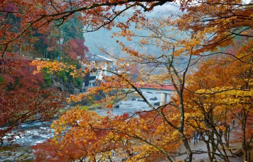 Autumn in Japan: The Colorful Town of Asuke