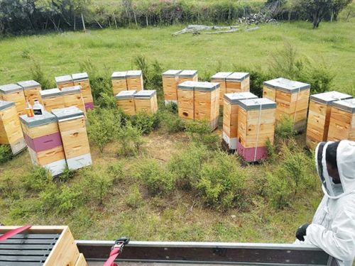 3 common concerns about hosting beehives