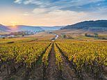 Burgundy by bicycle: Saddling up for a vintage ride through wine country