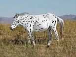 DNA analysis reveals there are no wild horses in the world