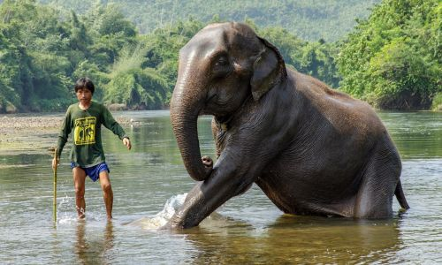 Walk on the wild side: 12 photos of Thailand's wildlife, from mischievous monkeys to amazing elephants