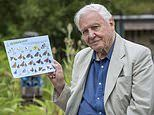 Sir David Attenborough wants YOU to help with the world's biggest butterfly count
