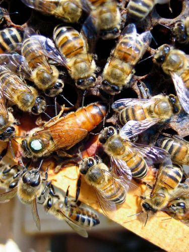 Protein, fats and minerals: Why bees need pollen