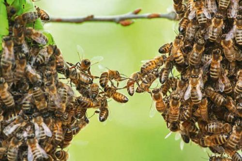 What to do when you discover a bee swarm