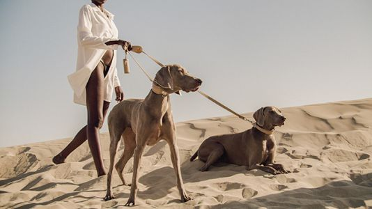 The World's First Fashion House For Dogs Debuts A Minimalist Collection Dubbed The Sahara