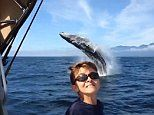 Young boy is photobombed by a breaching whale off Canada