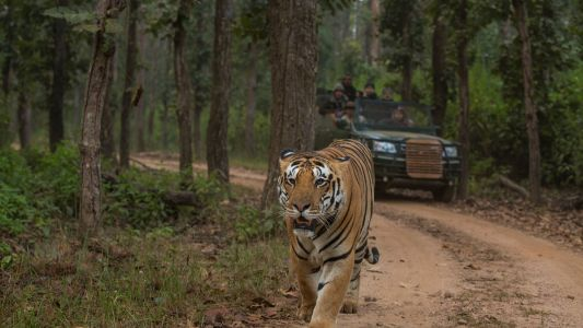 The best wildlife safaris in India