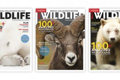 How we chose the cover: Best Wildlife Photography 2018
